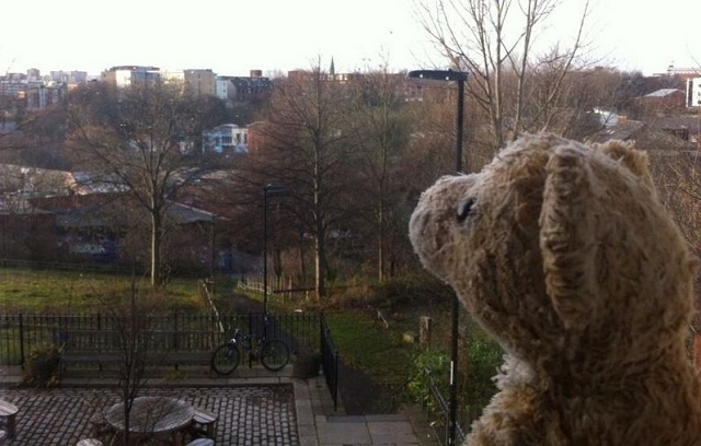 """""""#lostbear looking out at the Newcastle morning, ready for the journey back."""" Lauren Bishop Branch found the stuffed animal on a train over the weekend and turned to social media to reunite it wit ..."""