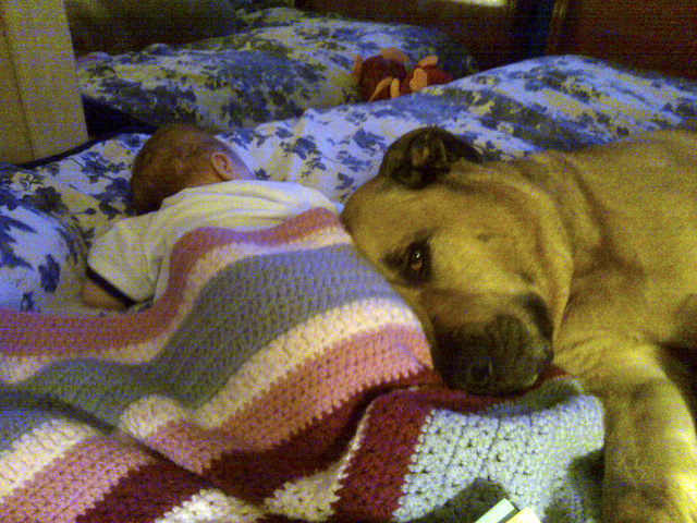 Baby Jeremiah Eskew-Shahan, left, is pictured with  the family dog, Onion, in this undated family photo.  Onion, a mastiff-Rhodesian mix  who had recently turned 6 years old, killed the boy after  ...