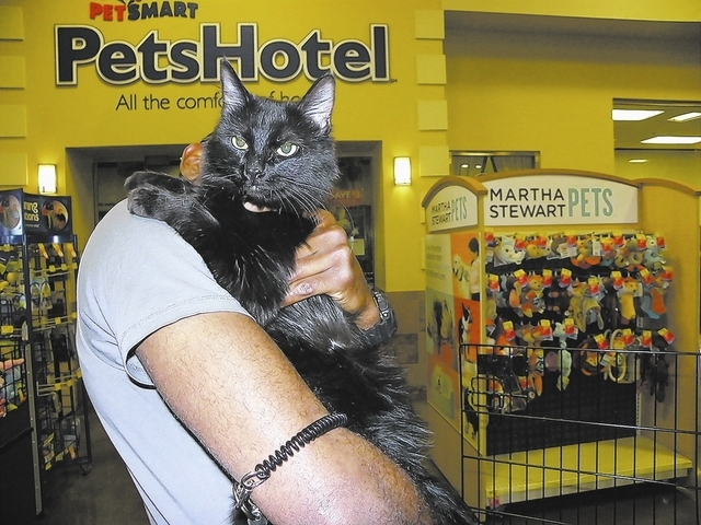 Karma  Paws 4 Love Karma is a 2-year-old female domestic shorthair. This beauty was found under a gazebo with her five kittens. Karma is a very good girl. She is ready for her own home and family  ...