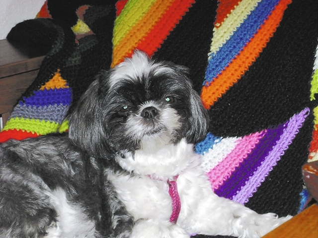 """Henderson resident David Ross said, """"Candy is such an arrogant little princess she doesn't even like other dogs!"""""""