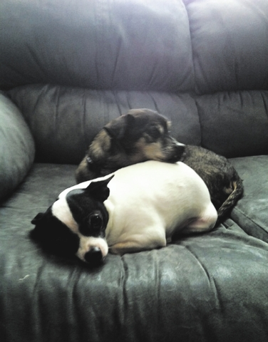 """Megan Lopez of Las Vegas said, """"These are my precious babies and the light in my life. There are literally two peas in a pod. They are side by side constantly. They play together, sleep together ..."""
