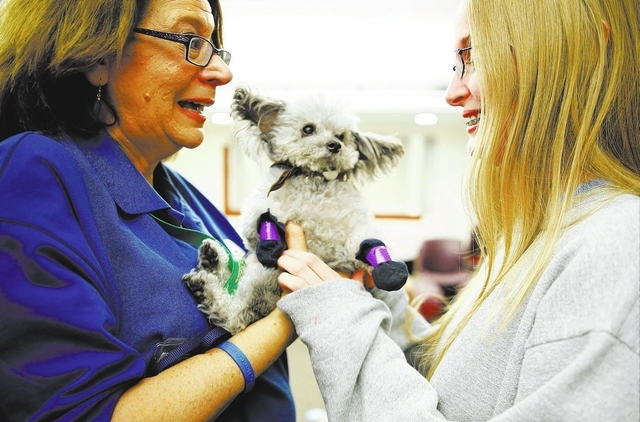 Sue Grundfest hands 11-year-old Petey, a teacup poodle, to freshman Sara Austin during a Paws for a Break event put on Dec. 3 by the Love Dog Adventures therapy program. (Chase Stevens/View)