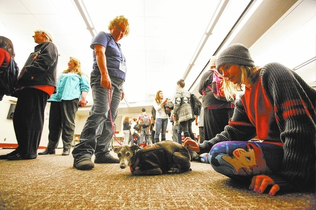 UNLV sophomore Heather Conway, right, pets 7-year-old Dash, an Italian greyhound, as Leslie Phillips holds the leash at UNLV's Lied Library during a Paws for a Break event put on Dec. 3 by the L ...