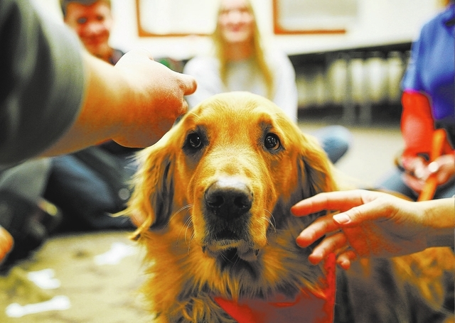 Students pet Boise, a 5-year-old golden retriever, Dec. 3 at UNLV's Lied Library during a Paws for a Break event put on by the Love Dog Adventures therapy program. (Chase Stevens/View)