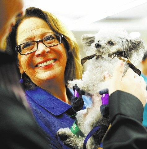 Sue Grundfest holds 11-year-old Petey, a teacup poodle, for UNLV students during a Dec. 3 Paws for a Break event put on by the Love Dog Adventures therapy program. (Chase Stevens/View)