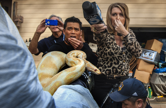 While interviewing  Sondra Berg, Santa Ana Police Animal Services supervisor, television reporters Bobby DeCastro, from FOX11, and Wendy Burch, of KTLA 5 plug their noses to avoid the stench emana ...