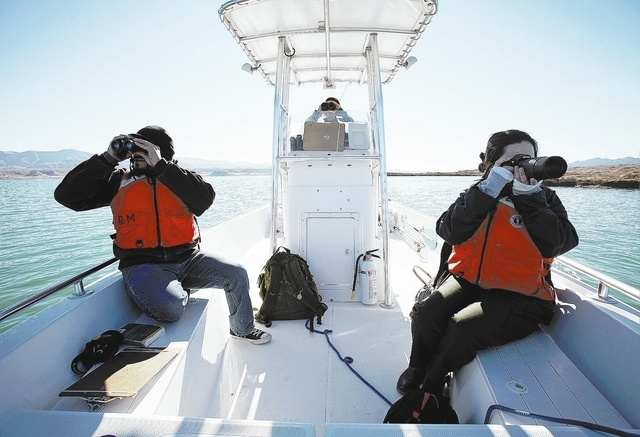 From left, Jimmy Linares, biologist Ross Haley and Taylor Nunley look for bald eagles on the Overton Arm of Lake Mead Wednesday, Jan. 15, 2014. The National Park Service conducted it's annual eagl ...