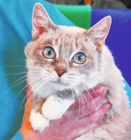 Mimi Nevada SPCA They say you can look in my crystal blue eyes and see tremendous kindness. I am an expressive young girl who likes to softly chat with you throughout the day. My name is Mimi, and ...