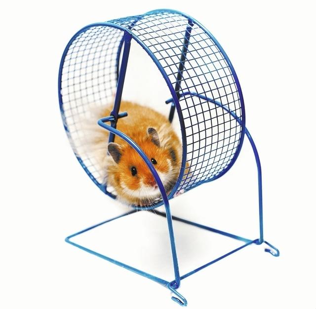 Hamster running on a wheel