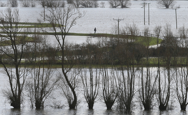 In this photo taken Sunday Feb. 2, 2014, a man walks along the raised banks of the  flooded River Parrett near Muchelney in Somerset, England, the village has been cut off by road since Jan. 1 thi ...
