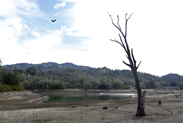 In this photo taken Tuesday, Feb. 4, 2014, is the Centennial Reservoir, one of the two water sources for the city of Willits, Calif. In the midst of a historic drought, the reservoir is only one-t ...