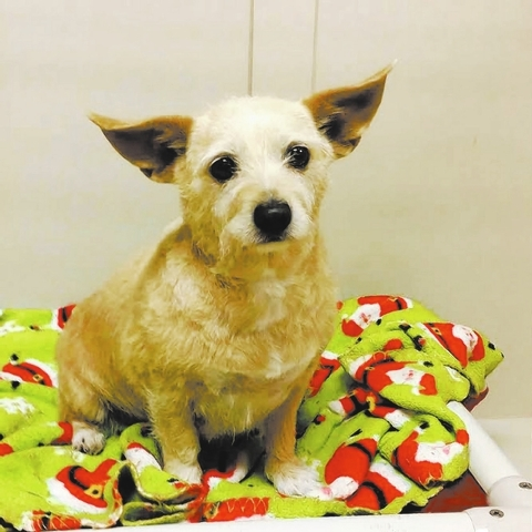 Lucy The Animal Foundation Do you love to give belly rubs? Because I love to get them! I'm Lucy (I.D. No. A752809), a 2-year-old spayed female terrier who is very loving. While I enjoy fun and l ...