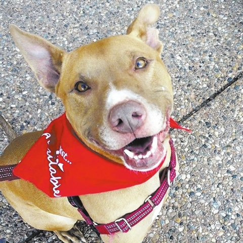 Petey Animal Network Petey is smart, sweet, lovable and looking for a home. He is a 2- or 3-year-old shepherd mix exuding joy and energy. This happy boy loves treats, toys and a good belly rub. Pe ...