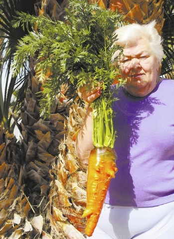 "Las Vegas resident Jean Womack said, ""This 3¾-pound carrot was grown by Larry Womack in a 9-inch-deep above-ground planter. His winter garden is in a greenhouse. The carrot was planted the firs ..."