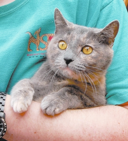 Gretchen Nevada SPCA I am a social butterfly fascinated by people and cats. Getting to know and understand you is my hobby, so toys don't interest me much. My name is Gretchen, and I am a blue a ...