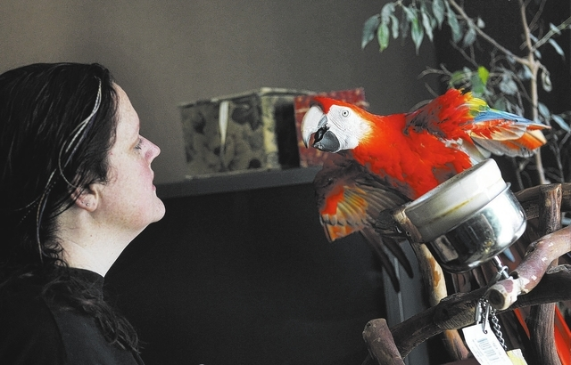 "Rehoming Director Skye Marsh of the Southern Nevada Parrot Education Rescue & Rehoming Society talks to ""Scarlet"" in her home in Las Vegas on Jan. 28, 2014. (Jason Bean/Las Vegas Review- ..."