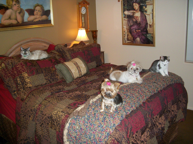 """Las Vegas resident Ralph Poznecki said, """"This is why my wife Cheryl and I do not get a very comfortable night's sleep. Our happy brood has their favorite spot, and I might add, 'pecking orde ..."""