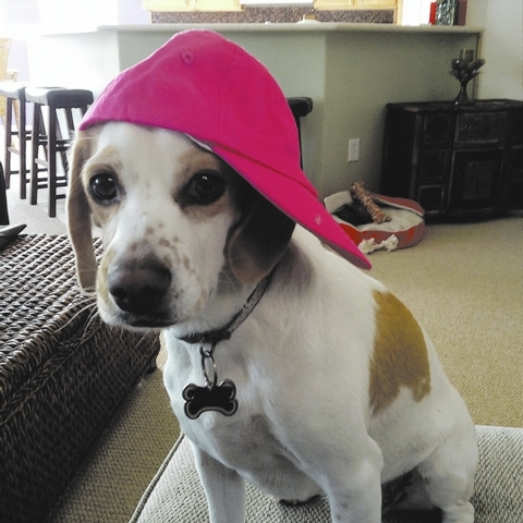 """Summerlin residents Mike and Pattie Gray said, """"This is our little beagle dudette, Katie, who always keeps us laughing in our home. Hard to have a bad day with her around! Love her so much!"""""""