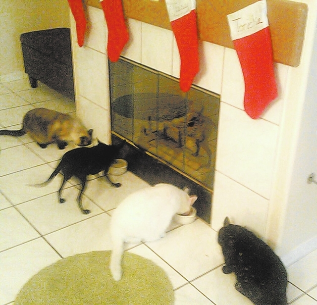 """North Las Vegas resident Robert Llamas said, """"These are my four kiddos eating grilled salmon under their stockings. From left, Xuxa, Lady, Missy and Tonicka. They are rescues, and they are good  ..."""