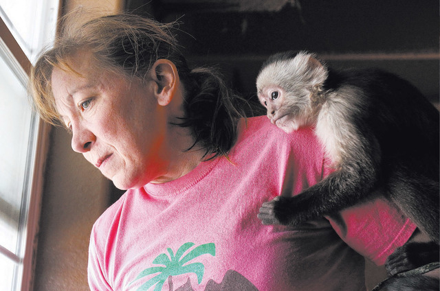 Valerie Holt looks out a window as a capuchin monkey holds onto her at Roos-N-More in Moapa. Fundraising is underway for a new kitchen and public restrooms for the zoo. (John Locher/Las Vegas Revi ...