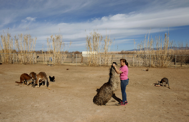 Valerie Holt hugs an emu at the Roos-N-More Zoo in Moapa on Jan. 23. (John Locher/Las Vegas Review-Journal)