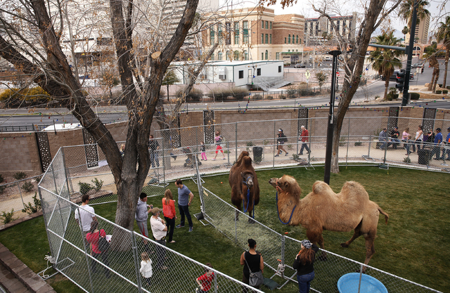 Crowds of people look at a temporary zoo at the Zappos.com headquarters in Las Vegas Saturday, Feb. 15, 2014. Animals from the Roos-N-More zoo were on display downtown to raise money for the zoo w ...