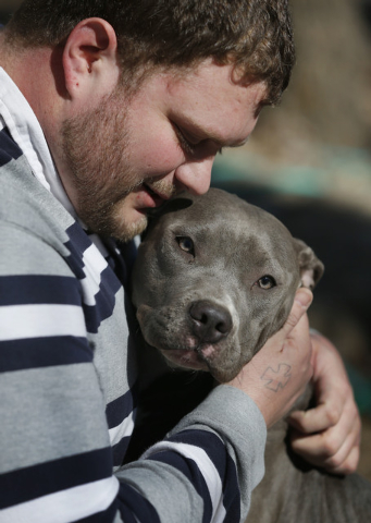 Cameron Younglove plays with a pit bull terrier named Sooke at his kennels near Eudora, Kan., Sunday, March 9, 2014. The kennel raises their dogs indoors in a family environment and are socialized ...
