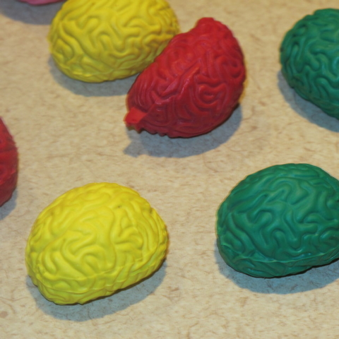 In this Feb. 25, 2014 photo, pencil erasers in the shape of the human brain lie on a table at Montefiore Hospital in the Bronx borough of New York. The erasers were given to third-graders who atte ...