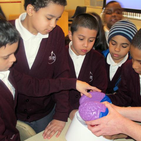 In this Feb. 25, 2014 photo, third-graders, from left, Hunter Thomas, Matthew Velez, Sebastian Mendez, Jayden Gonzalez and Elijah Farias examine a plastic model of a brain at Montefiore Hospital i ...
