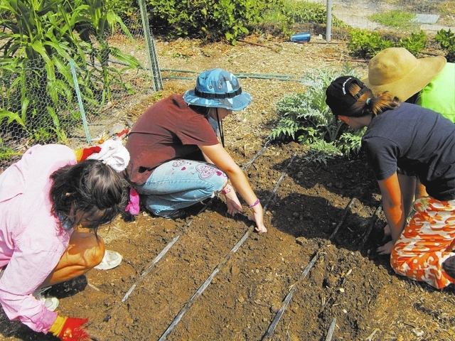 Mary Sloan, from left, Sophia Bergeron, Dailynn Burgess and Karyn Johnson plant garlic at Food for Thoughts School Demonstration Garden at 4600 Horse Drive in Las Vegas, August 2, 2013. (Special t ...