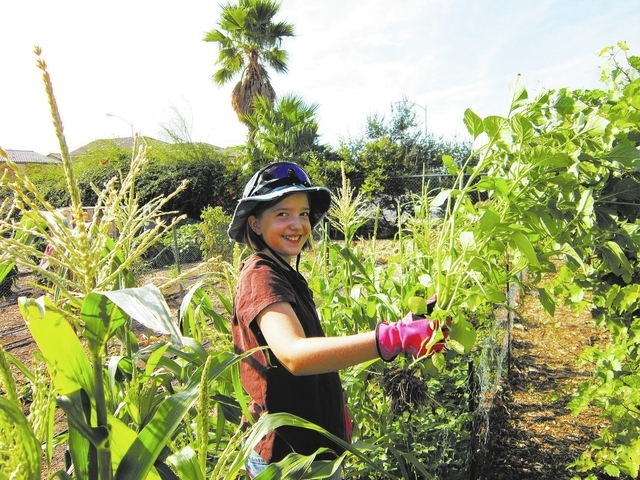 Sophia Bergeron pulls weeds from corn rows at Food for Thoughts School Demonstration Garden at 4600 Horse Drive in Las Vegas, August 2, 2013. (Special to View)