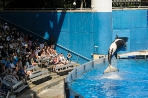 Park guests watch as a killer whale flips out of the water in March 2011 at SeaWorld Orlando''s Shamu Stadium in Orlando, Fla. (Associated Press)