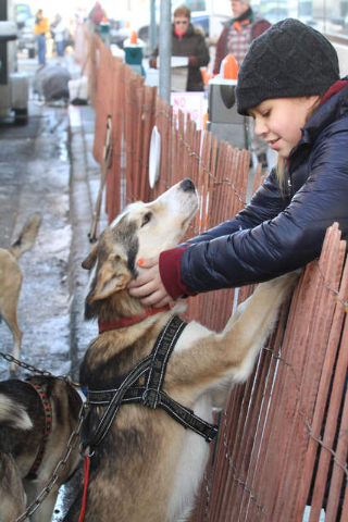 Iditarod spectator Yasmin Rodriguez, 11, of Anchorage, Alaska, pets Caesar, a dog belonging to musher Michelle Phillips of Tagish, Yukon Territory, before the ceremonial start of the 2014 Iditarod ...