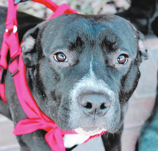 Mia Animal network Poor Mia was found wandering a neighborhood, looking for food. Her rescuer searched for an owner, but no one came forward. This girl is sweet and loves everyone she meets, inclu ...