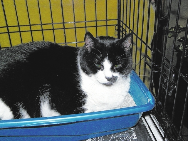 Barney Paws 4 Love Barney is a black and white male, 9 years old, who lost his best buddy. He likes wet food and enjoys a good nap. He has tested negative for FELV/FIV and is vaccinated, neutered  ...