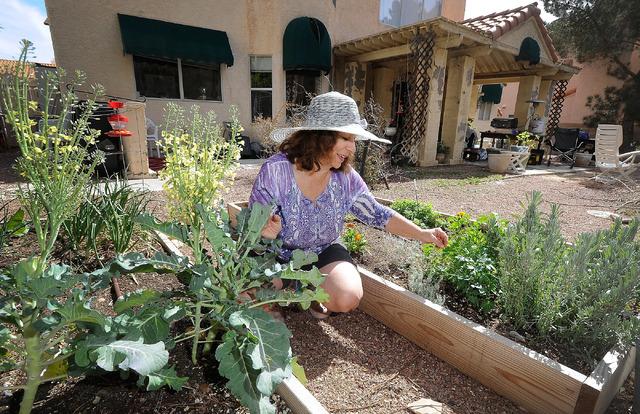Great Master Gardener Joann Reckling Tends To Her Backyard Garden, March 2.  Reckling Has Turned