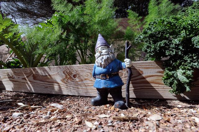 A garden gnome stands guard in Joann Reckling's backyard garden, March 2. (David Becker/View)