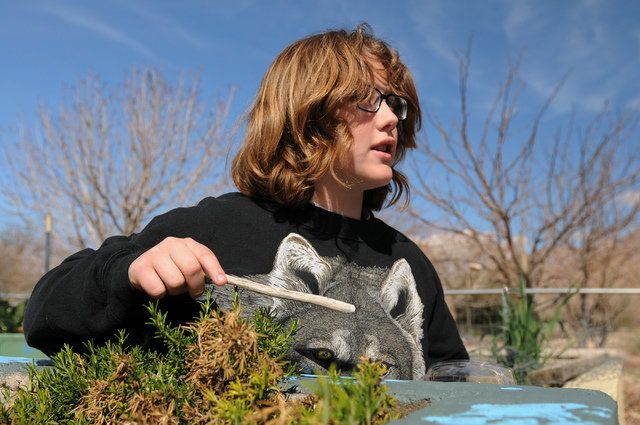Erin Wilcox, 11, searches for insects in the garden at the Clark County Center for Urban Food Production in Las Vegas Saturday, March 1, 2014. Master gardener volunteers teach the Cooperative Exte ...
