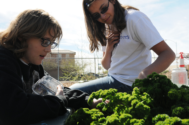 Students Erin Wilcox, left, and Dailynn Burgess, search for insects in the garden at the Clark County Center for Urban Food Production in Las Vegas Saturday, March 1, 2014. Master gardener volunte ...