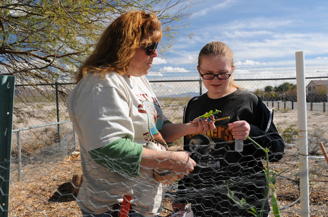 Master gardener Karyn Johnson, left, shows her student Jamie Butler, 16, a ready to eat pea at the Clark County Center for Urban Food Production in Las Vegas Saturday, March 1, 2014. Johnson and o ...