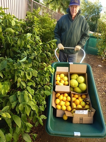 Master Gardener Jeneane Young's garden produces more fruit each year. (Special to View)