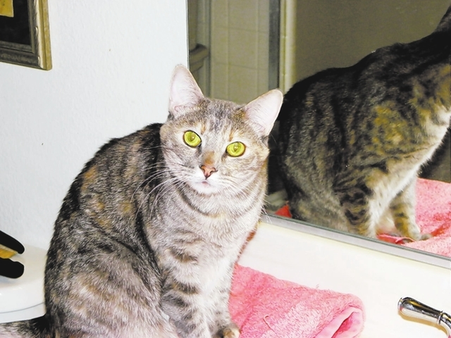 Lulu Paws 4 Love Lulu is a 3-year-old female diluted tortoiseshell. This girl was found in the back of a U-Haul with 45 other cats. LuLu loves people, to be petted and will head-bump you for atten ...