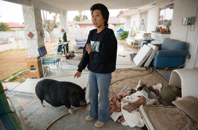 Crystal M. Kim-Han talks about her non-profit pig rescue, VegasPigPets, at her Las Vegas home Friday, Feb. 28, 2014. Kim-Han is seeking the county's permission to house up to eight pigs at her hal ...