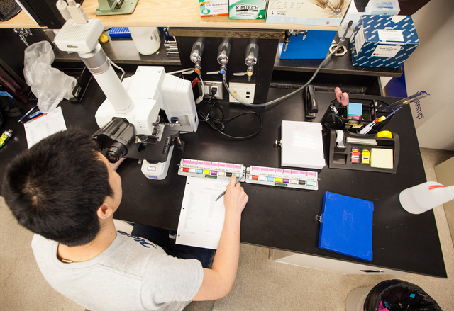 UNLV graduate student Hongbin Jin looks through slides to identify and note down various kinds of pollen and molds in a lab in the White Life Sciences building on the campus of the University of N ...