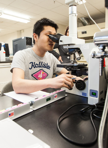 UNLV graduate student Hongbin Jin looks through slides to identify various kinds of pollen and molds in a lab in the White Life Sciences building on the campus of the University of Nevada, Las Veg ...