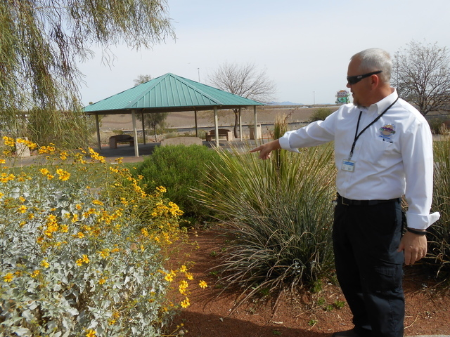 Preston Goodman shows some of the plants at the Acacia Demonstration Gardens. (Michael Lyle/ Las Vegas Review-Jounral)