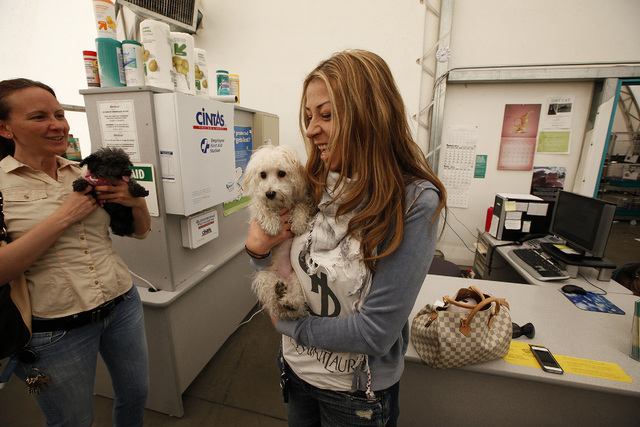 Trina Pascucci holds Aideen, a poodle mix that was rescued from the Prince and Princess pet store fire in January, shortly before adopting the animal at the Animal Foundation LIED Animal Shelter o ...