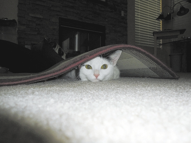"Tina Shinn of Las Vegas said, ""When she is not taking a nap on the bed with my husband each afternoon, 2-year-old Casper loves to crawl under the scatter rugs around the house. We were able to s ..."