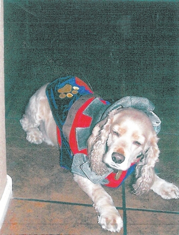 "Debbie Randolph of North Las Vegas shared this photo. ""Tex, short for Texas, is an 8-year-old rescued cocker spaniel who is a total delight and fun to be around. He loves to get dressed up at Ha ..."