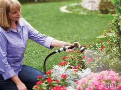 Bringing life back into your yard and garden
